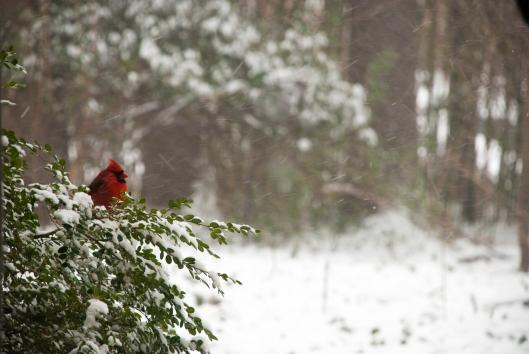 Cardinals-0061
